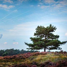 Arbre sur la lande sur Jan van der Knaap