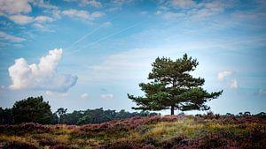 Baum in der Heidelandschaft von Jan van der Knaap