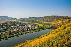 Pünderich aan de Moezel, met de wijngaarden in herfstkleuren. van Jan van Broekhoven