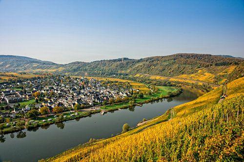 Pünderich aan de Moezel, met de wijngaarden in herfstkleuren.