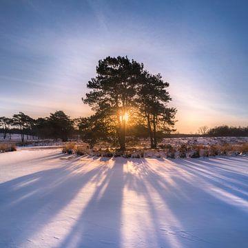 Sunburst van Jeroen Lagerwerf