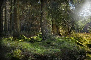 in de ochtend in het bos van Dieter Beselt