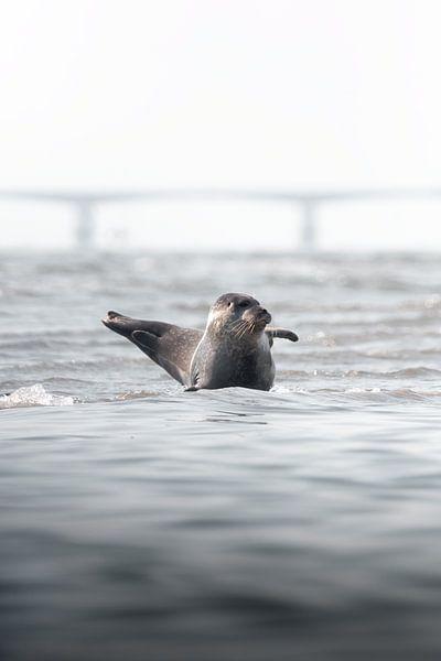 Zwaaiende zeehond   Natuurfotografie Zeeland van Dylan gaat naar buiten