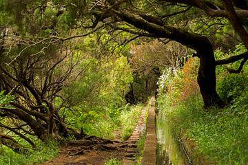 Levada-Wanderungen auf der Blumeninsel Madeira von Paul Wendels