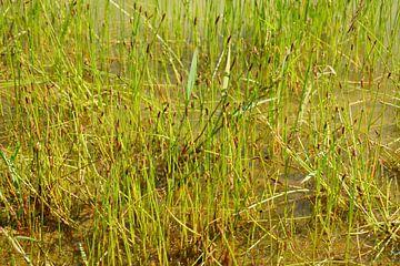 L'étang en été sur ViLa