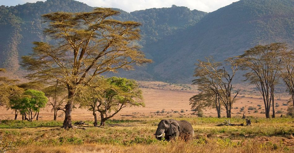 olifant in de Ngorongoro krater van Paul Jespers
