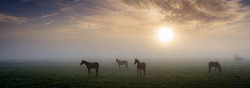 Paarden in de mist von Koos de Wit