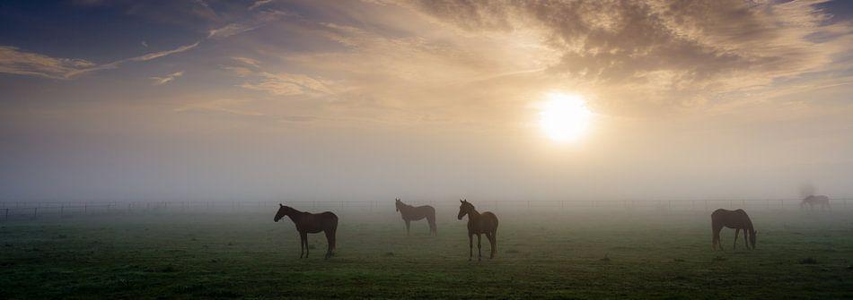 Paarden in de mist van Koos de Wit