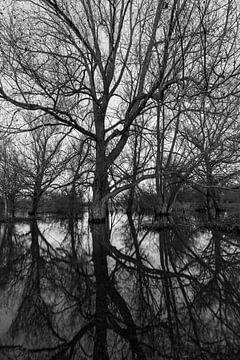 Perfecte reflectie van een boom bij hoogwater in de Maas van Kim Willems