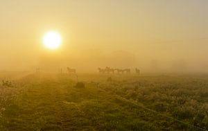 Paarden in mistig landschap