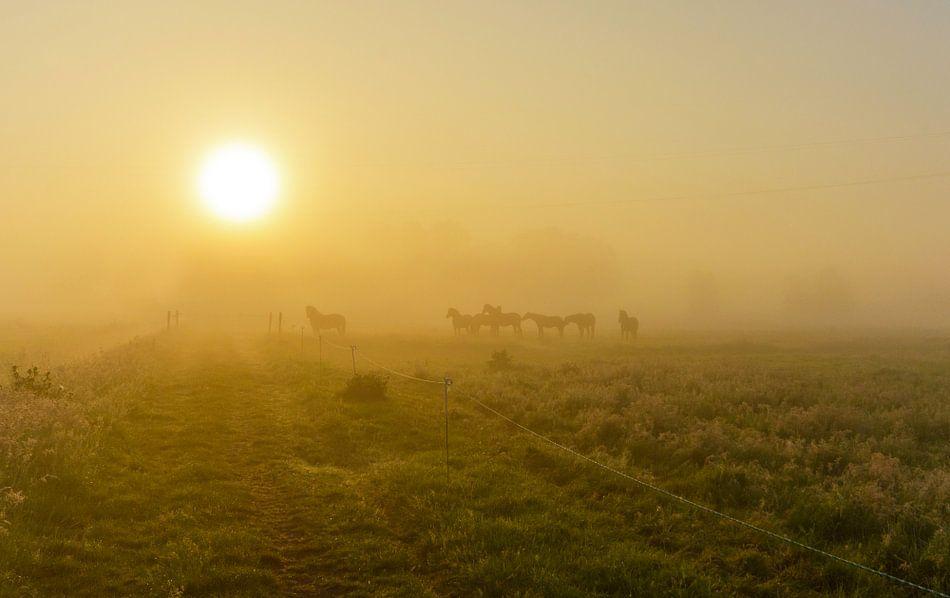 Paarden in mistig landschap van Remco Van Daalen