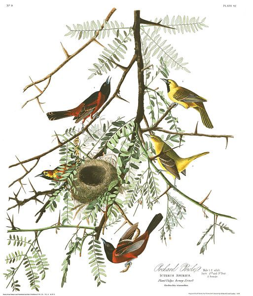 Tuintroepiaal van Birds of America