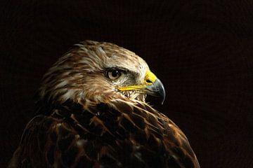Steppe Eagle  (Aquila nipalensis) sur