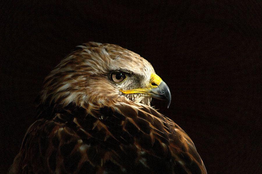 Steppearend (Aquila nipalensis) van Elly Brans