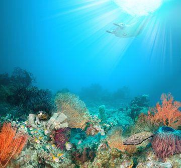 koraal rif. van Dray van Beeck