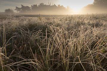 Morgennebel auf dem Gut Kallenbroek. von Michiel van den Ham