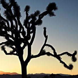 Kalifornischer Sonnenuntergang mit dem Baum von Silhouetjoshua. Joshua Tree Nationalpark von Tjeerd Kruse