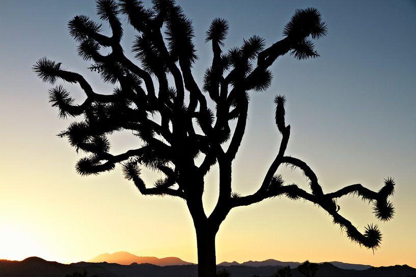 De Zonsondergang van Californië met de boom van Silhouetjoshua. Joshua Tree National Park van Tjeerd Kruse
