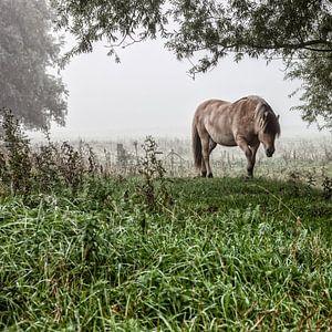 Paarden in de mist: Mystic horses (nr. 8 van 8)