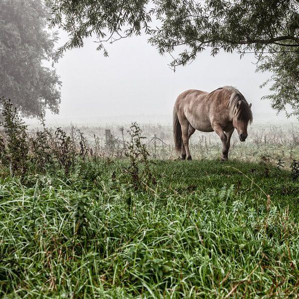 Paarden in de mist: Mystic horses (nr. 8 van 8) van Ramona Stravers