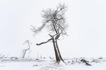 De Kromme van Joris Pannemans - Loris Photography