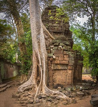 Vervlochten boom en tempel, Ta Prohm, Cambodja van Rietje Bulthuis