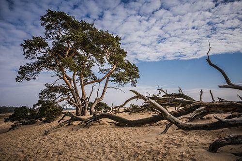 Veluwe zandverstuiving landschap (2) van Mayra Pama-Luiten
