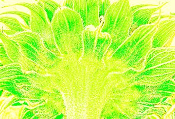 Zonnebloem van Jaap de Raat