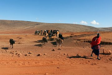 Masai herder met kudde bij de Ngorongoro krater, Tanzania. van Alida Stuut
