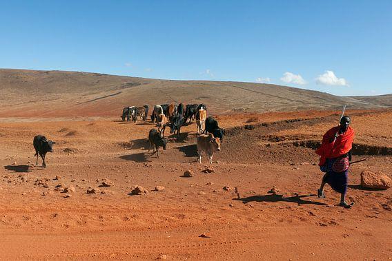 Masai herder met kudde bij de Ngorongoro krater, Tanzania.