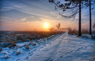 Foggy sunrise 1 von Natascha IPenD