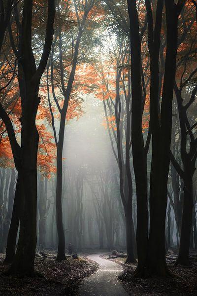 Het pad van Niels Barto
