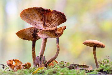 Pilze Herbstwald von Esther Ravesloot