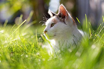 Katze im Sonnenschein von Miranda van Hulst