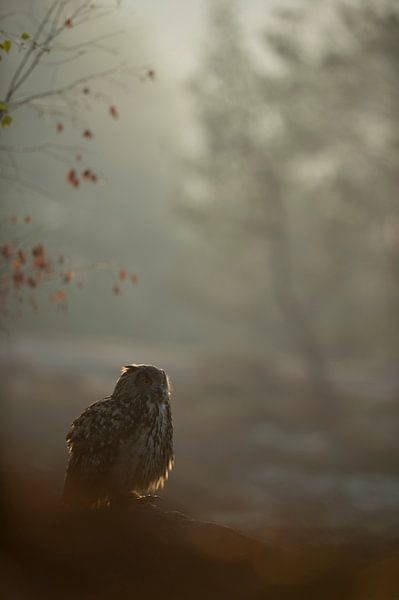 Northern Eagle Owl (Bubo bubo) sitting on some rocks, early morning, hazy backlit situation, at dawn van wunderbare Erde