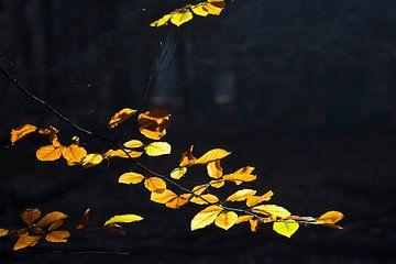 Gouden herfstbladeren van Barbara Brolsma