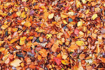 Bladerdek in het bos in de herfst van Dennis van de Water