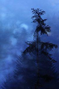 avondserenade van Susann Serfezi
