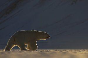 IJsbeer in weids ijslandschap van