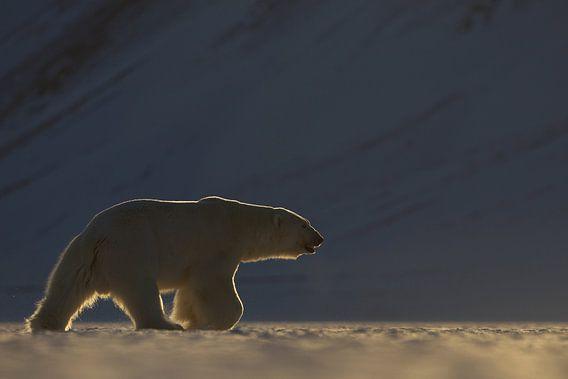IJsbeer in weids ijslandschap van AGAMI Photo Agency