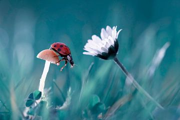 Die Geschichte von der Dame Bug, der den Pilz zu überzeugen versucht, ein Datum mit dem schönen Gäns von 1x