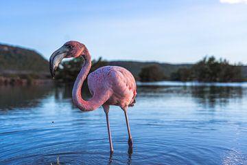 Flamingo van Marjon Boerman