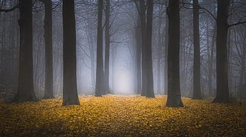 Sprookjesachtig bos van Niels Barto