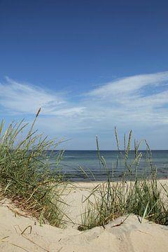 Duinen von Ostsee Bilder