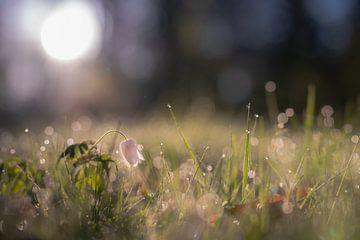bloemen part 112 van Tania Perneel