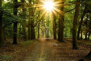 Rayons de soleil traversant les arbres dans la forêt au petit matin dans le Kaapse Bossen près de Do sur Robin Verhoef