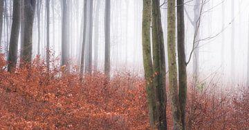 Letztes Herbstlaub im Winterwald von Tobias Luxberg