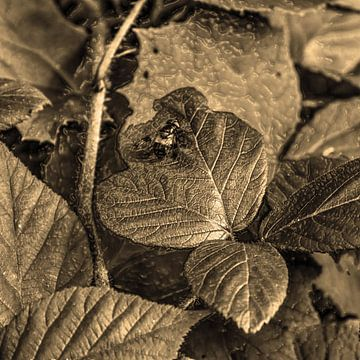 Digital Art Medium Blumen Pflanzen Sepia von Hendrik-Jan Kornelis