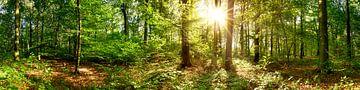 Lever de soleil dans la forêt sur Günter Albers