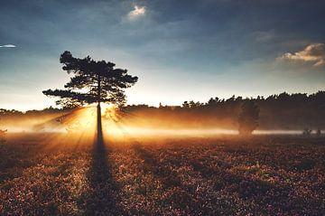 goldener Sonnenuntergang von Bianca Verweij